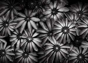 1st Place Monochrome - Beautiful Brollies - by Matt Klinger