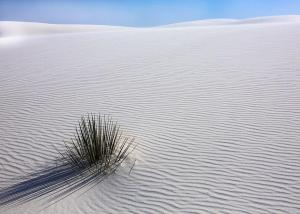 3rd Place Color A - White Sands Sopatree Yucca - by Stan Kupisz