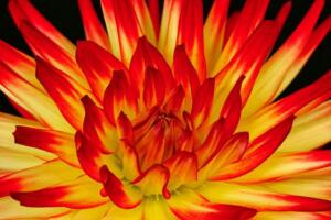 Color A 2nd Place – On Fire Robert Rutkin