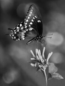 Monochrome 2nd Place – Flower Dancer Jeff Bishop