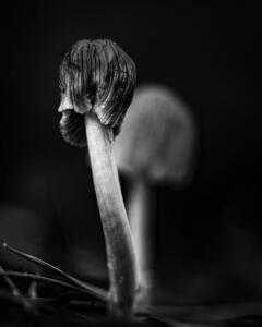 Monochrome 3rd Place – Back to The Nature Randy Seaman