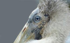 Color B – 2nd Place Joy Fox Stork Contemplation