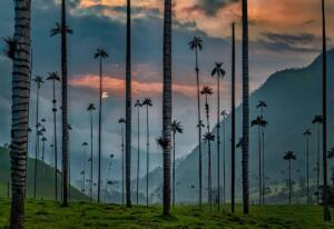 Palm Trees William Grisaitis GATEWAY TO EDEN